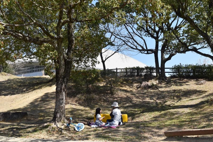 木陰でピクニック