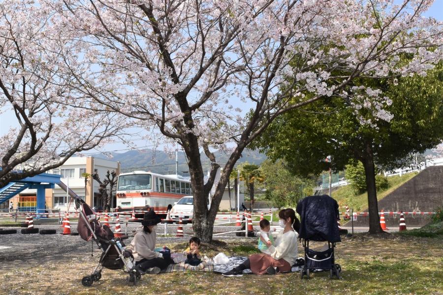 桜の下でピクニック