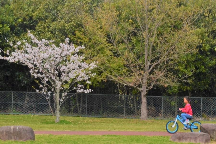 自転車の練習もできます