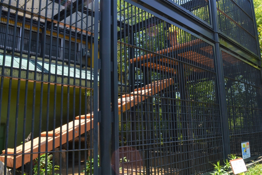 ライオンの避難棚