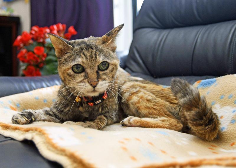 24歳4カ月の雌猫、チェリー。ソファの上がお気に入り(写真はいずれも南国市緑ケ丘3丁目)
