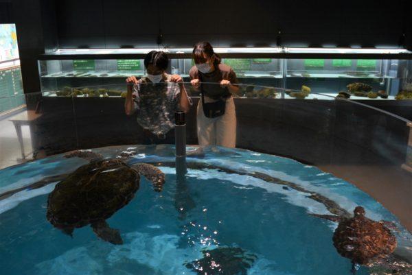 むろと廃校水族館|小学校の校舎を活用した高知県東部・室戸市の人気スポット
