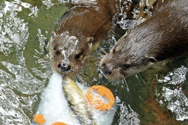 暑い夏は動物だって氷を食べたい|高知県立のいち動物公園で動物たちへ氷のプレゼント