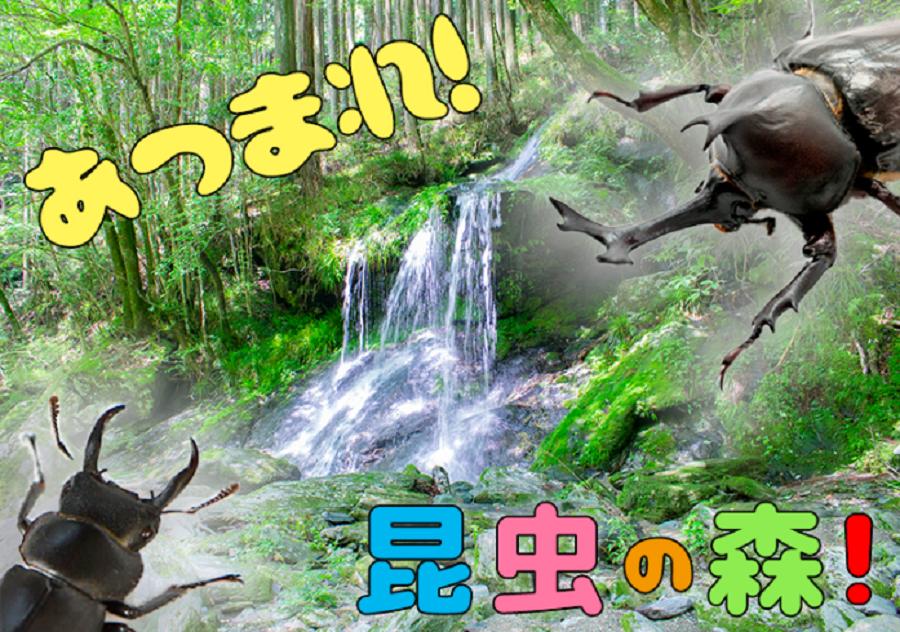 夏休みに1泊2日の自然体験を|大川村で「あつまれこんちゅうの森」