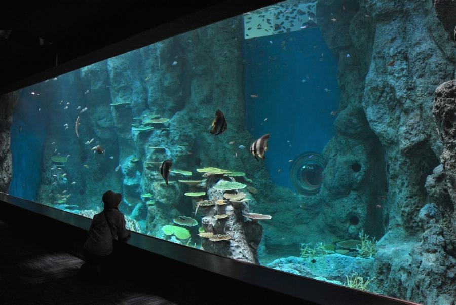 足摺海洋館SATOUMIでオープン1周年イベント 宝探し、夜間開館、打ち上げ花火も!