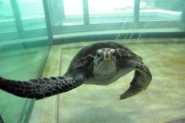 高知県立足摺海洋館「SATOUMI」|2020年7月18日にオープン。高知県西部・土佐清水市の自然を体感できます