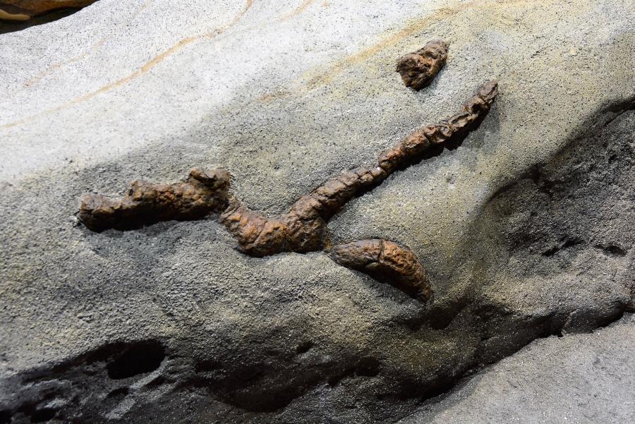奇岩には穴が空いていたり、貝がくっついていたり
