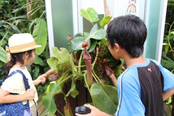 食虫植物展や植物スタンプラリーを楽しんで|高知県立牧野植物園で夏のイベント