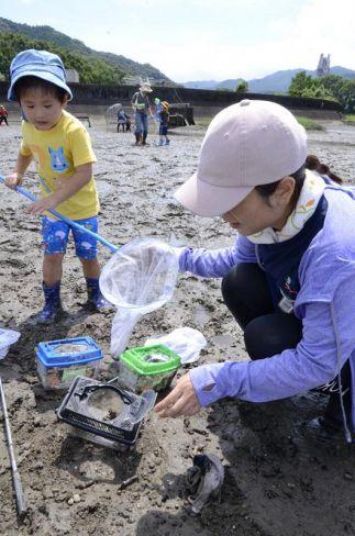 家族連れらが参加した干潟の生きもの観察会(須崎市押岡)