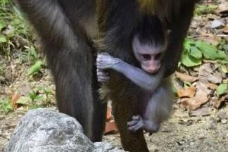 カメムシの魅力を知ろう 高知県立のいち動物公園で「カメムシ  エブリバディ!」