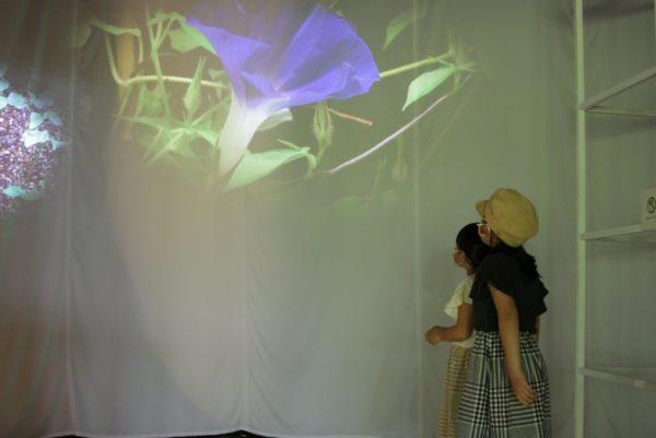植物はどのように成長している?|高知県立牧野植物園で企画展「植物は、うごく。」