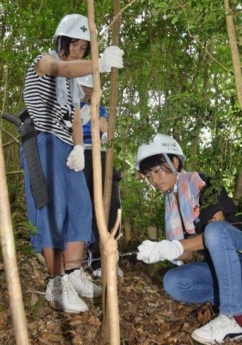 除間伐作業に挑戦する東又小児童(四万十町黒石)