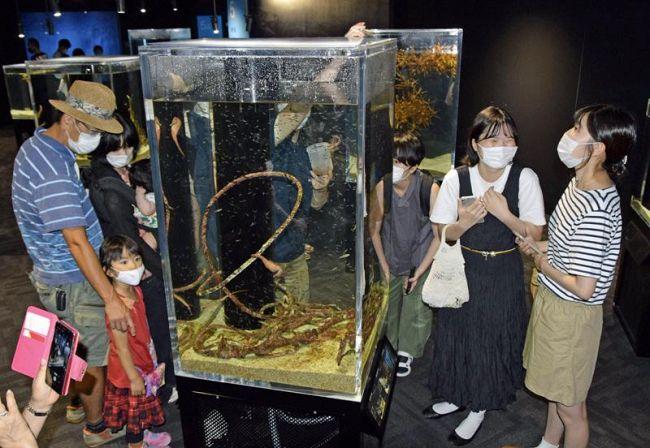 多くの入館者でにぎわう県立足摺海洋館 (土佐清水市三崎)