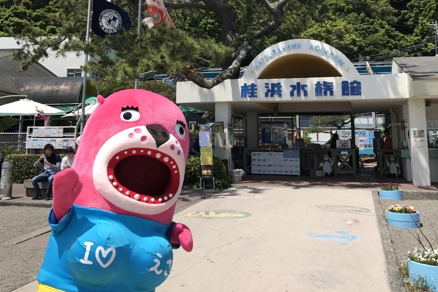 桂浜水族館|トドショーは四国唯一!アシカショーもある高知市桂浜の水族館