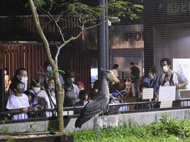 夜の動物を普段よりじっくり観察した来場者(香南市の県立のいち動物公園)