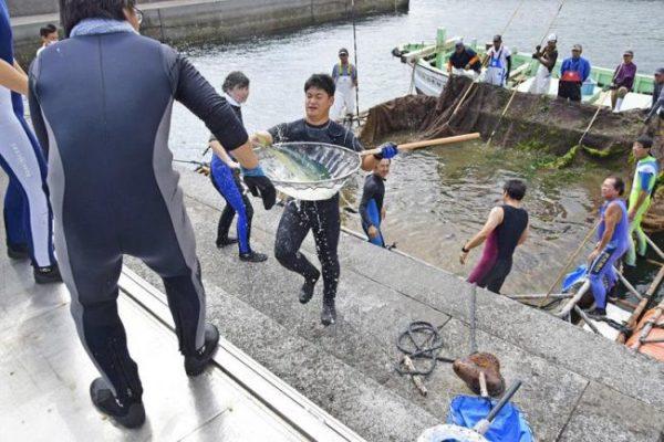 高知県立足摺海洋館「SATOUMI」に新しい魚が仲間入り