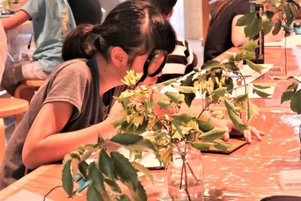 花びらの形は?葉の付き方は?|高知県立牧野植物園で子ども自然体験教室「植物を描こう!」