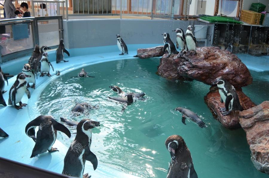 ペンギン団地