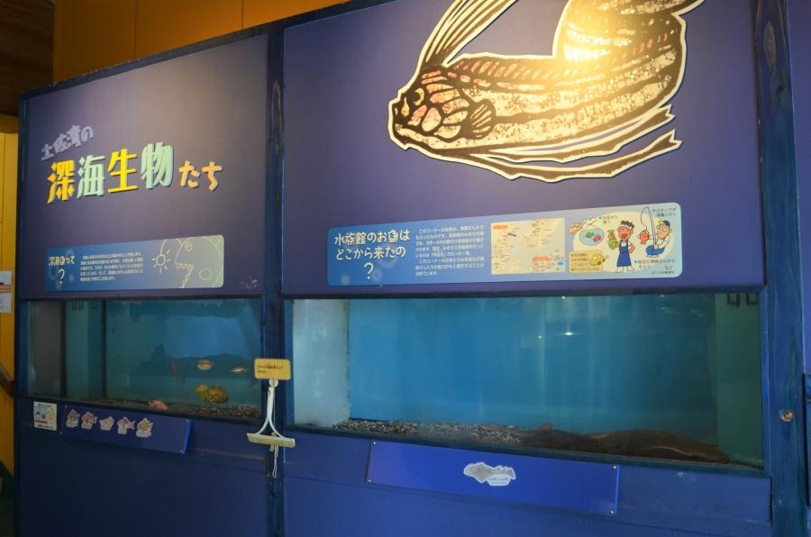 土佐湾の深海生物たち