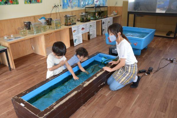 ザリガニや魚と触れ合えます|高知市のうらど龍馬保育園で「まりんらんど」
