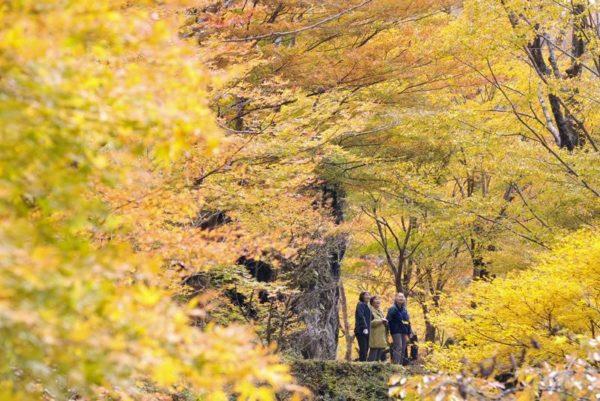秋のおでかけにぴったり!高知、香川、愛媛、徳島の紅葉の名所を紹介します