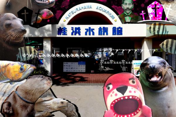 ホラーコスプレで夜の水族館を楽しもう|高知市の桂浜水族館で「ハマスイハロウィン2020」
