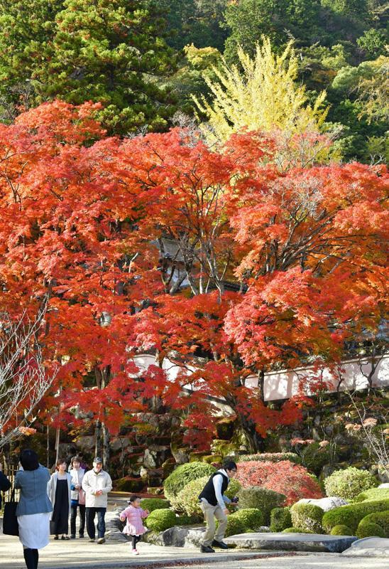 大窪寺(香川県さぬき市、2019 年 11 月 21 日)