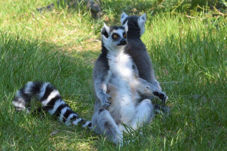 高知県立のいち動物公園|香南市にある「日本一」の動物園