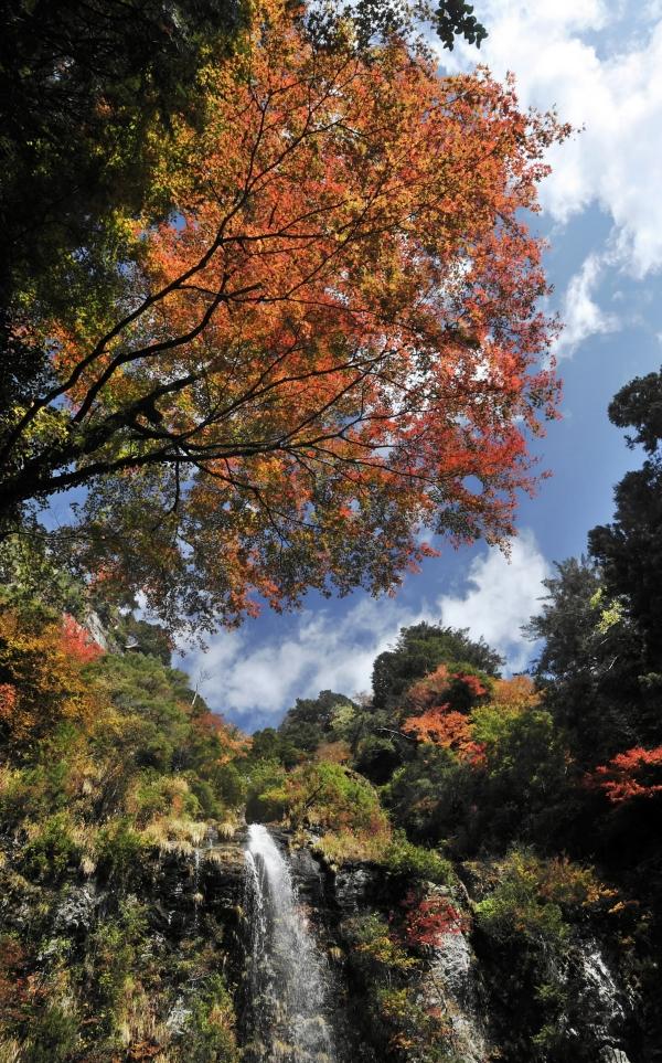 程野の滝(いの町西滝付近、2016 年 11 月 15 日)