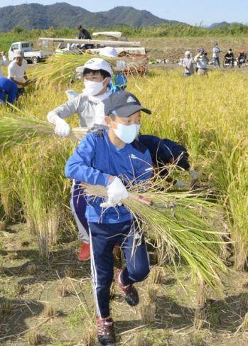 もち米の稲刈りを体験した児童ら(宿毛市坂ノ下)