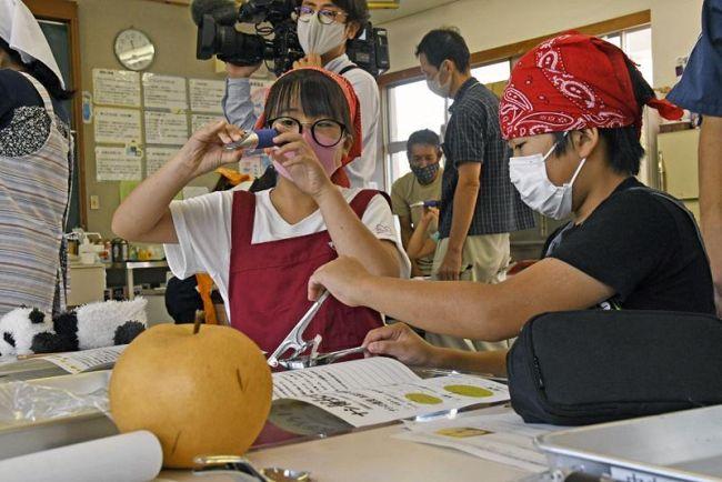 梨の糖度を測定する児童ら(いの町の川内小学校)