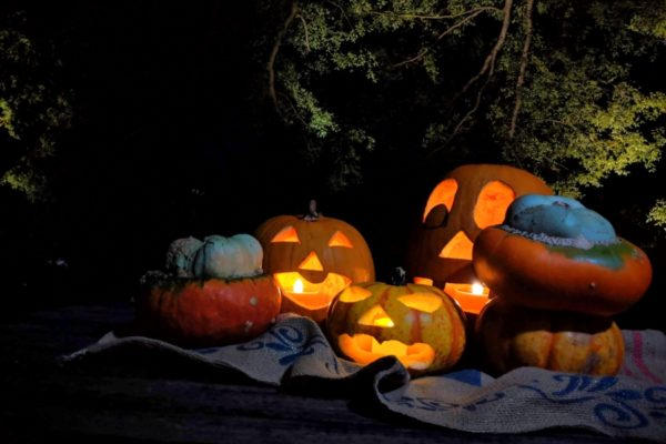 牧野博士に仮装してお菓子をもらおう|高知県立牧野植物園で「よるまきのハロウィーン」