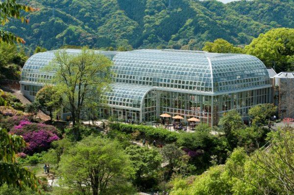 高知県立牧野植物園|植物観察やピクニックができる植物園