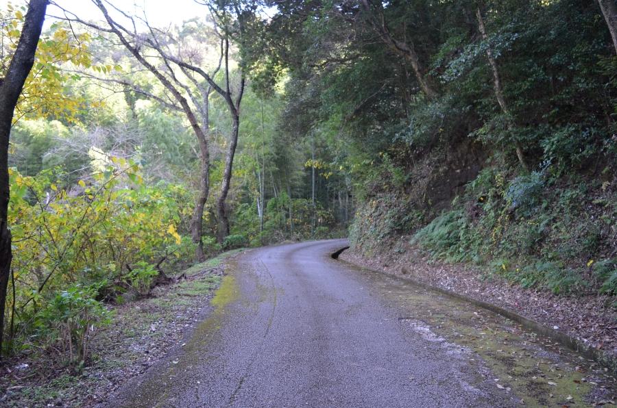 西側入り口からの上り坂。道中にはすれ違い用の待避所もあります。