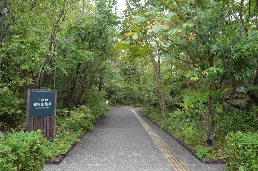 高知県の豊かな自然を再現しています