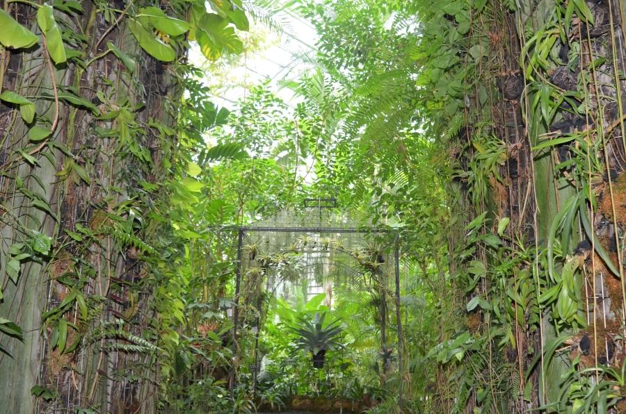温室の中は植物が生い茂っています