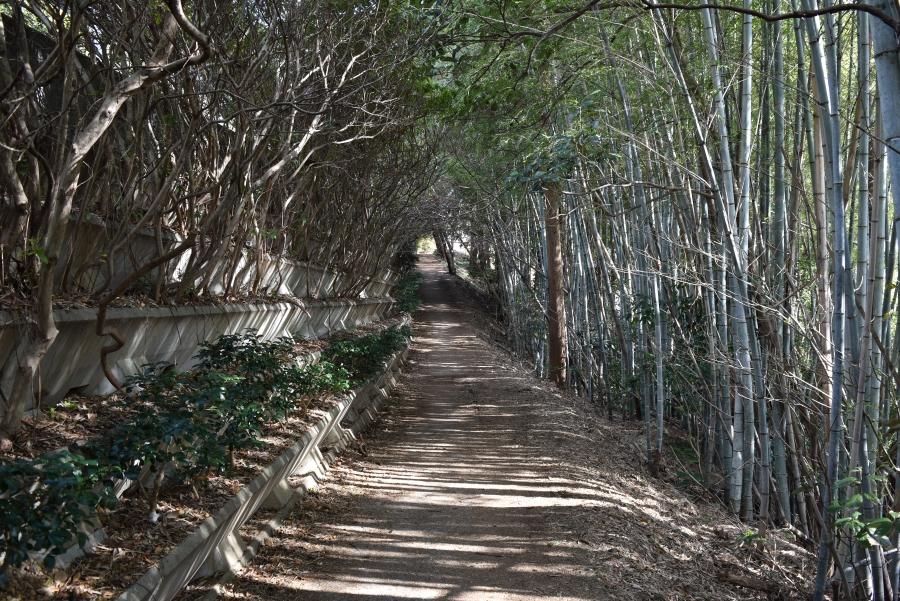木々のトンネルでできた近道。ちょっとした冒険気分が味わえます