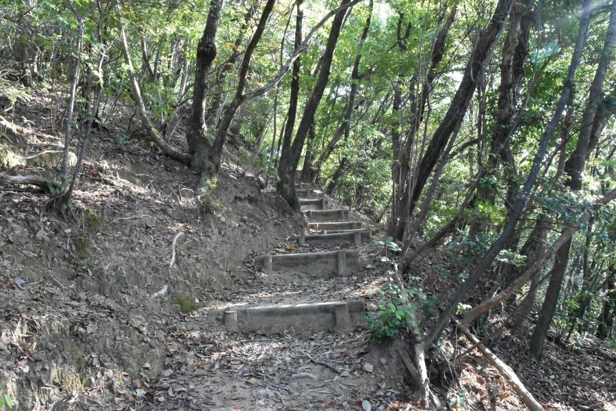 斜面や階段を上り下りしながら進みます。