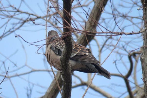 身近にいる鳥を観察してみよう!|高知市で「親子野鳥ふれあい教室」