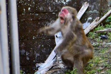 サルが宿毛市で大暴れ|高知の1週間(2021年2月7~13日)