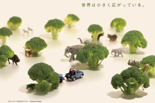 ※終了しました。高知県立美術館で「MINIATURE LIFE展」|招待券2枚1組を5人に(提供=高知新聞企業)