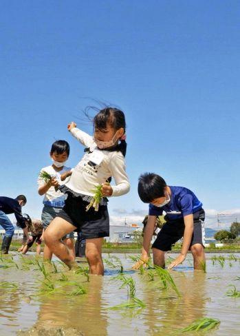 青空の下、田植えを楽しむ子どもたち(南国市田村)