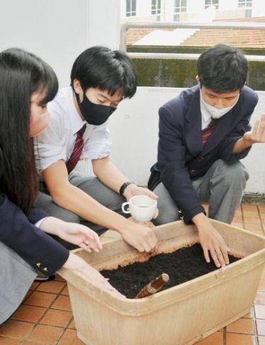 ひまわりの種を植える生徒たち(高知市の土佐塾中高校)