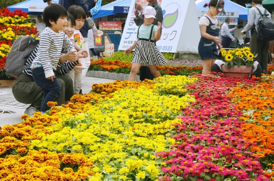 高知市の中央公園で「こうち春花まつり2021」|約4万鉢の花苗が登場