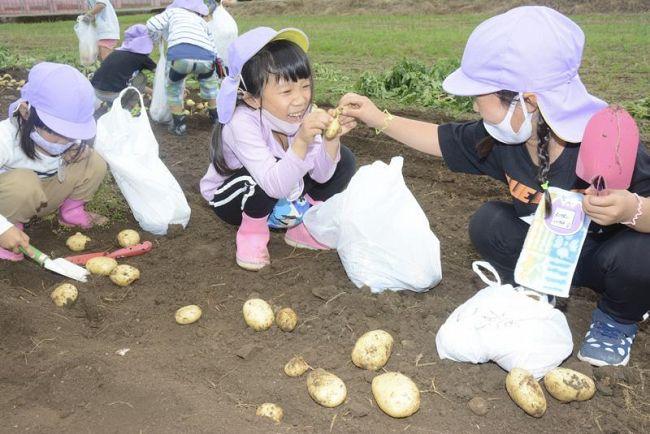 ジャガイモ掘りを楽しむ園児(田野町)