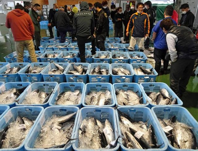 カツオの価格が低迷している魚市場。うれしい豊漁のはずが…(中土佐町久礼)