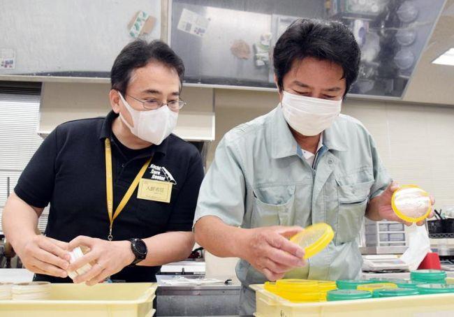 酵母の生存を確認する上東治彦さん=右=と諸野祐樹さん(高知市の県工業技術センター)