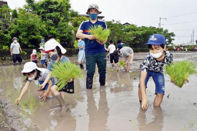 田植えを体験する幼稚園児や小中学生(芸西村和食甲)