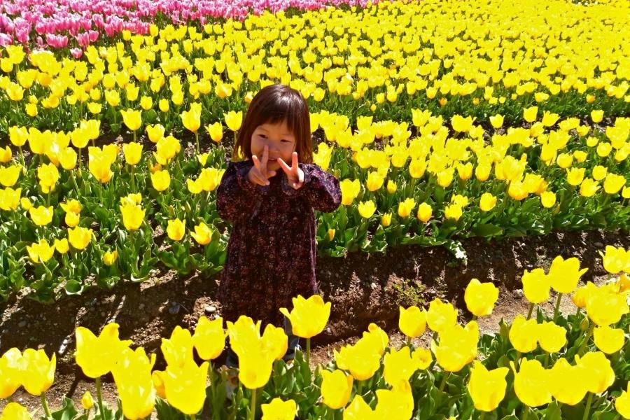 黄色いチューリップに囲まれて