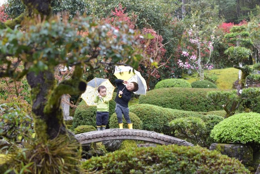 雨の日の寄り添いフォト。きれいな庭園で